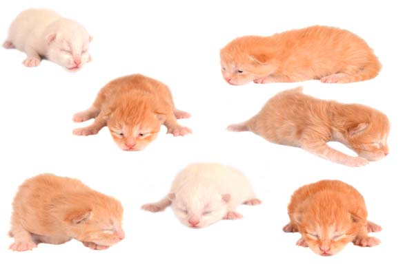 newborn kittens on white