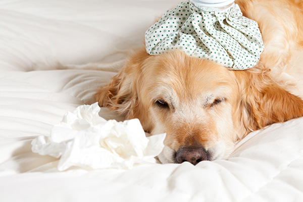 Coping with grievance of pet's death