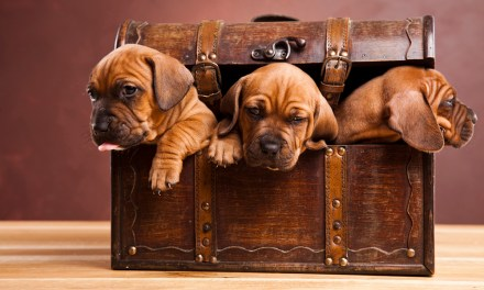 Cute puppies looking for home