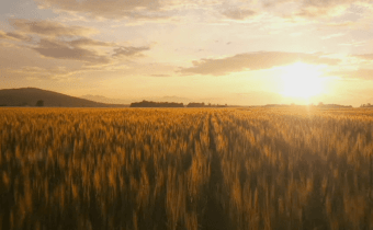 In The War on Wheat, this enlightened physician fights back