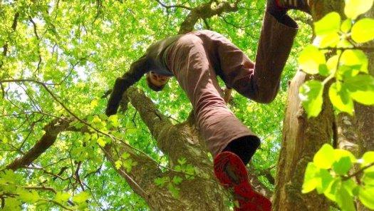 Climbing the oak tree at Wheatland Farm Eco Lodges