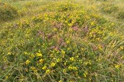 Dartmoor flowers, lovely!