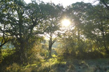 Sun shining through woods on Popehouse Moor SSSI, Wheatland Farm Devon