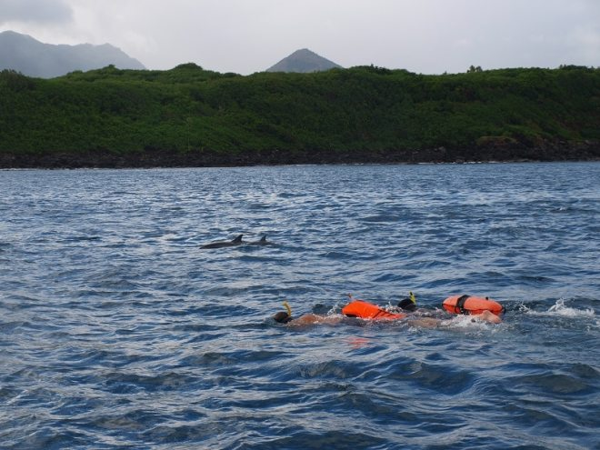 Swimming with dolphins in Mauritius.