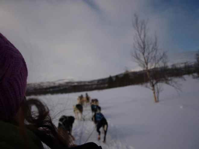 Dog sledding in Abisko, Sweeden