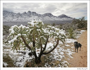 Cholla tree in white
