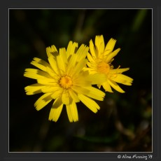 Lovely weeds