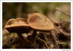 Mushroom beauty