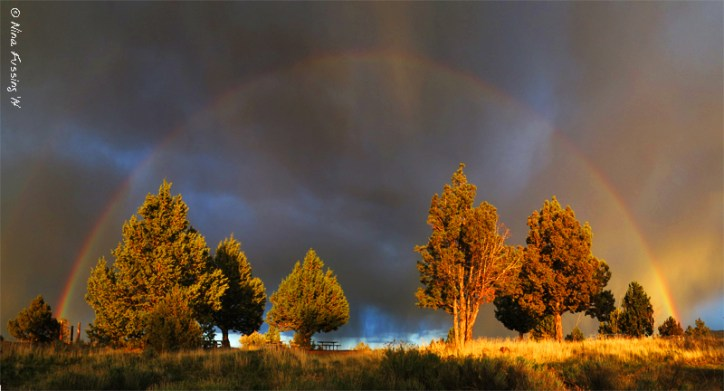 An unexpected, but fabulous rainbow. Taken right out of our front window.
