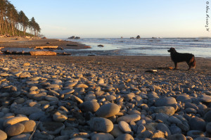 Doggie poses by the rocky Ruby Beach