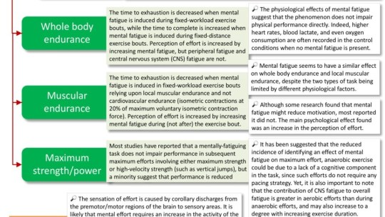 Infographic – mental fatigue influences aerobic exercise more than anaerobic
