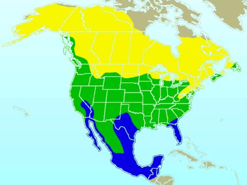 Range map of American Robin