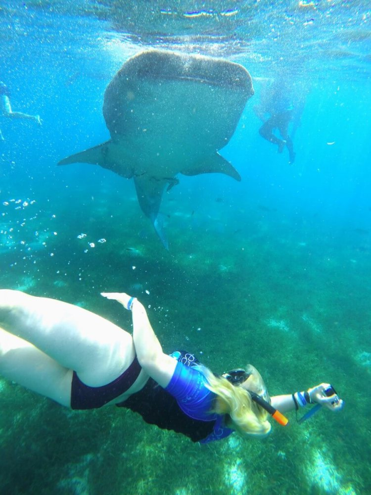 snorkelling with whale sharks in the philippines