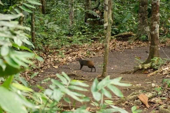 Atta Rainforest Lodge-04244
