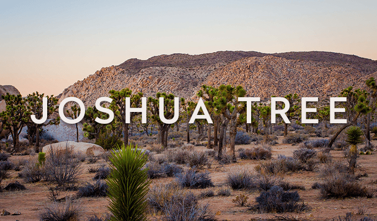 Joshua Tree in One Day