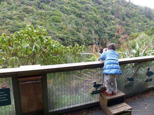 Bird watching at Zealandia Eco Sanctuary