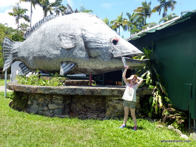 daintree things to do with kids
