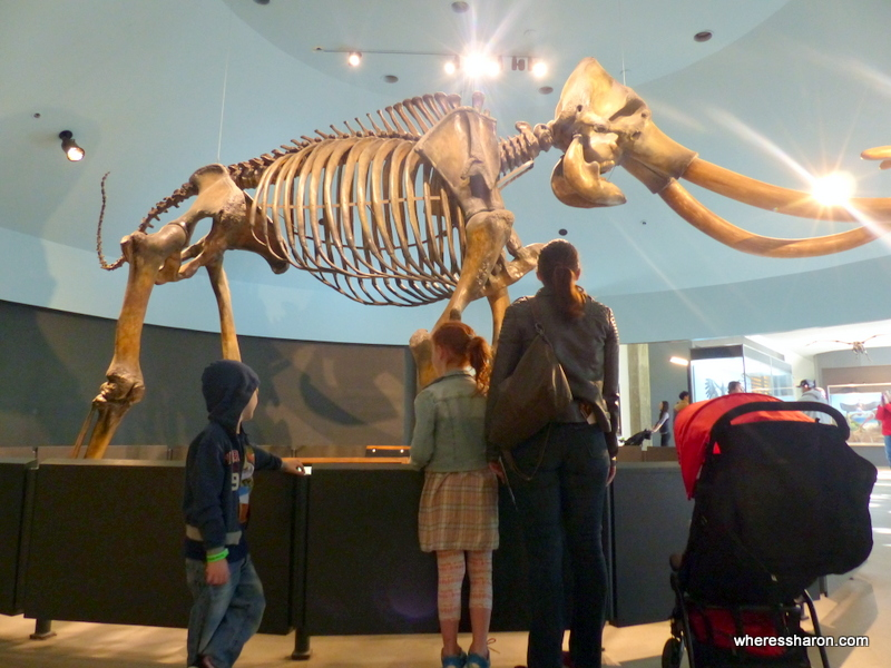 what to do in los angeles for kids at La Brea Tar Pits