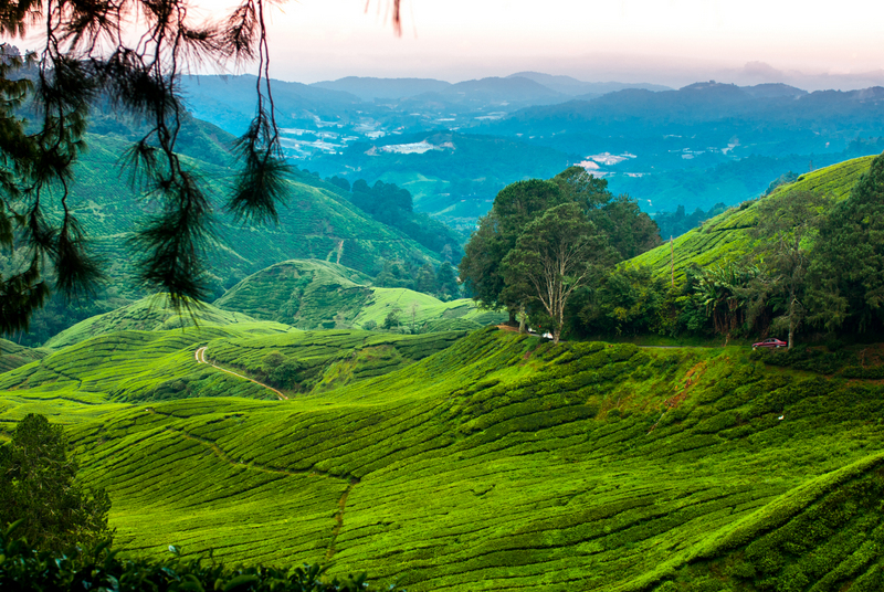 top things to do in cameron highlands malaysia