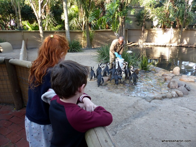 World of Birds kid friendly places in cape town