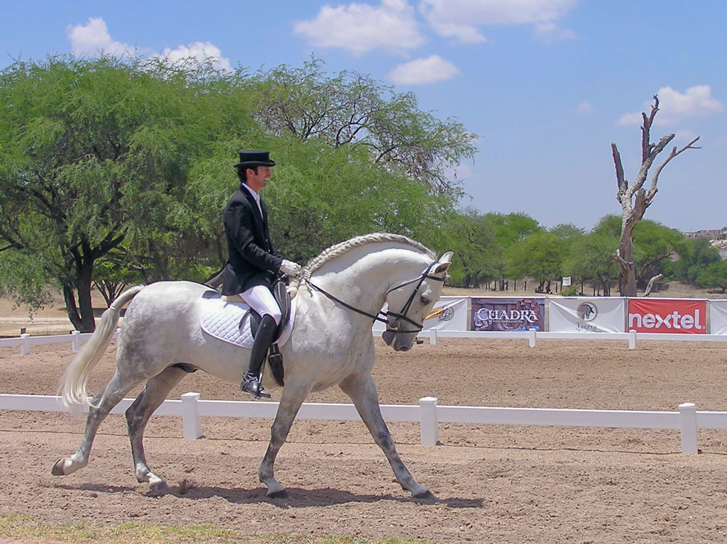 World class dressage - instruction, exhibitions, and competitions. San Miguel de Allende has it covered with an international flavor.