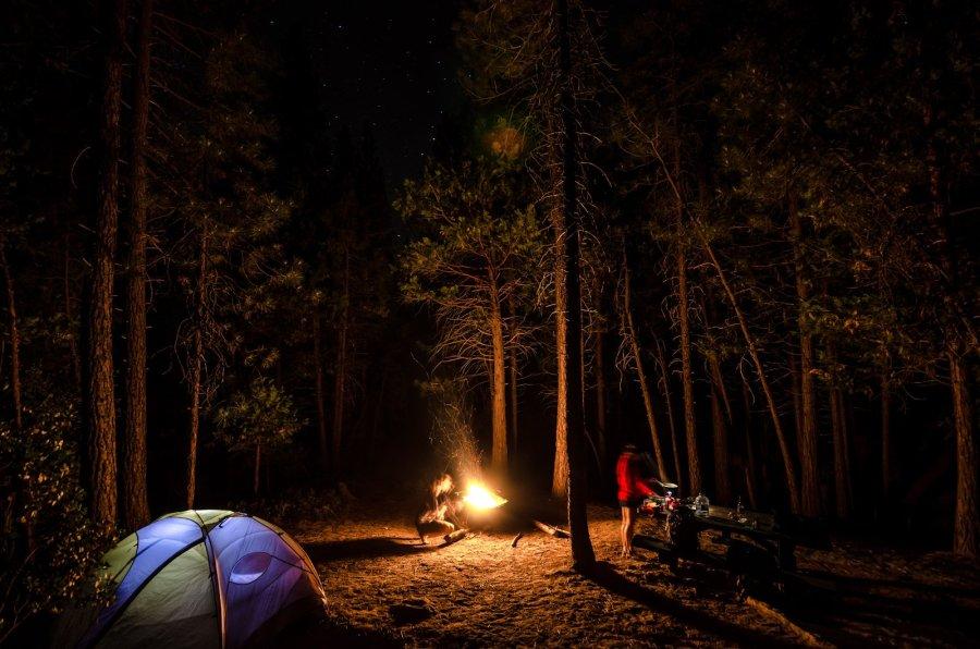 Stars Sequoia Forest William Woodward