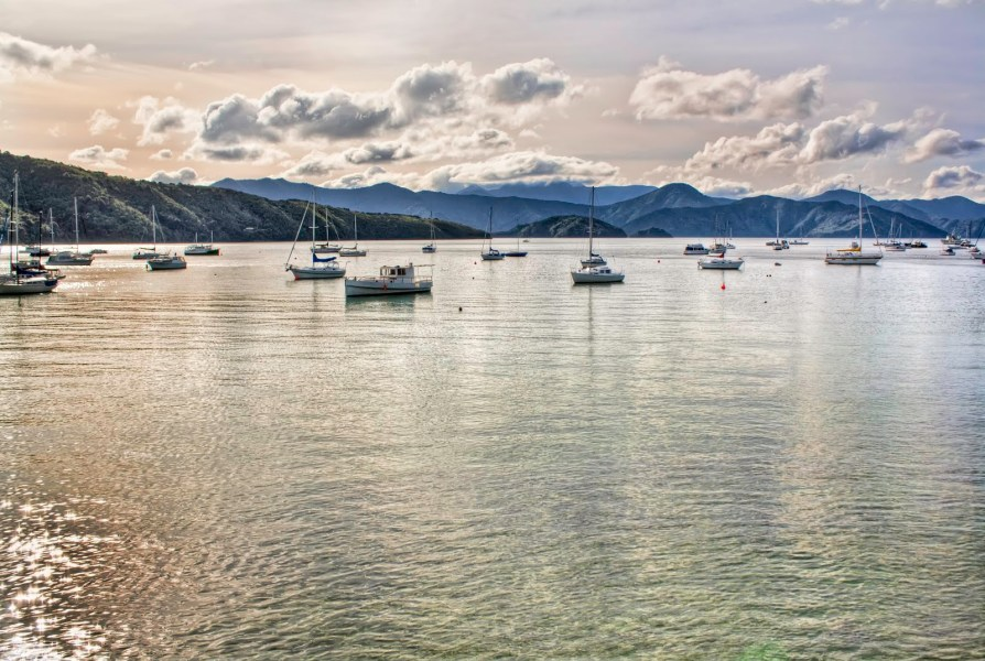 Sun on Harbour New Zealand William Woodward