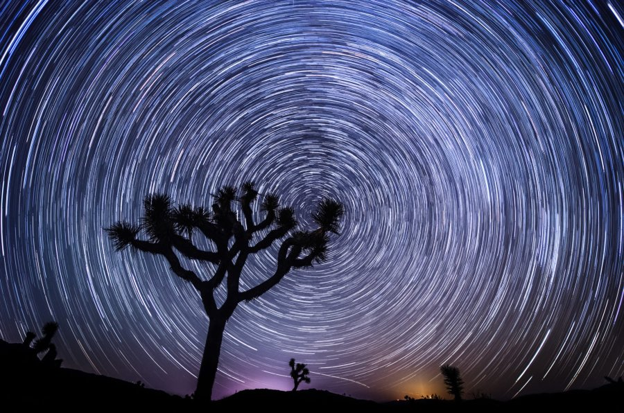 Moment in Time Joshua Tree William Woodward