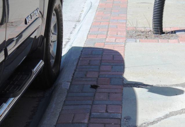 A tiny, rabid bat, crawling on the sidewalk
