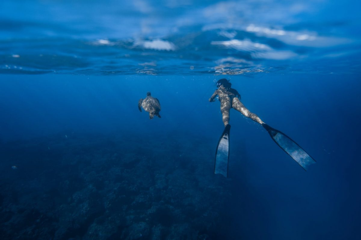 woman diving near turtle in blue water