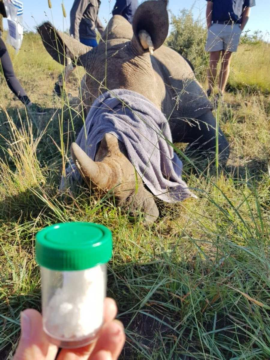 Roaming with Rhino for conservation - Where Wild Things