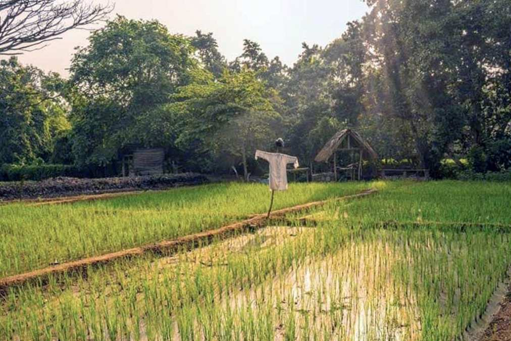 Image: Anantara Peace Haven Tangalle Resort