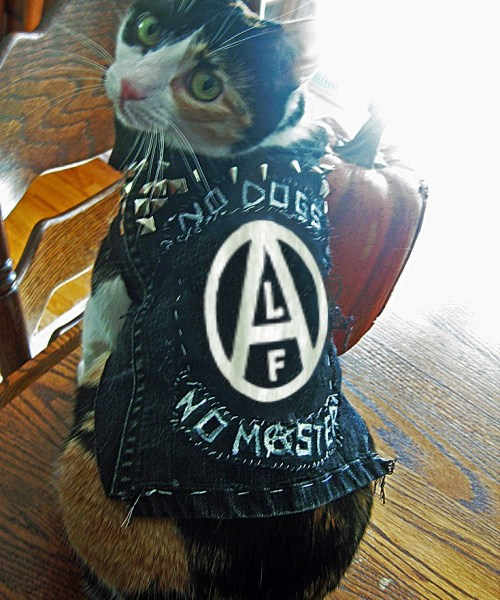 alf-kitty-punk-vest
