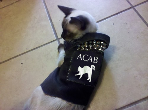 punk-kitty-ACAB-vest