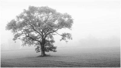 06 Lone Tree in the Mist