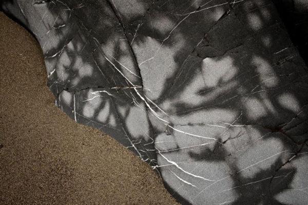 June's Web (photo by Tom Trimbath)