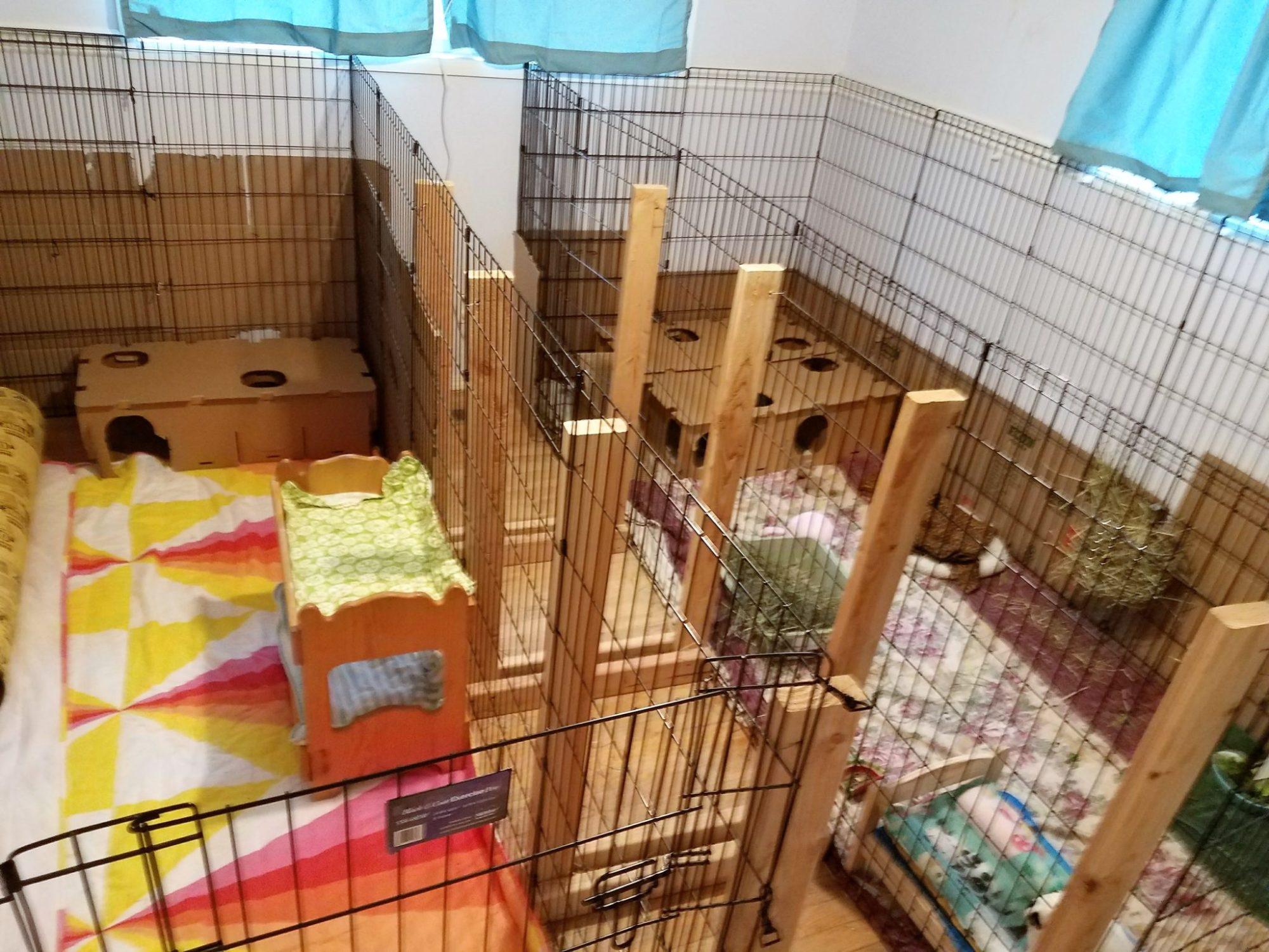Rabbit Room Enclosures