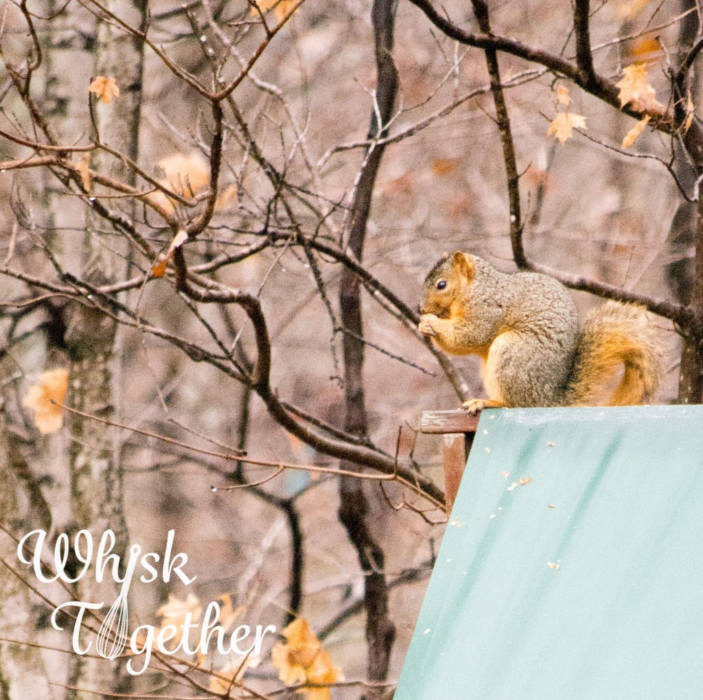Squirrel-5582 on WHisk Together