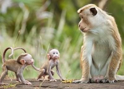 MONKEY KINGDOM: Happy Earth Day and New Clips #MonkeyKingdom #AvengersEvent #EarthDay