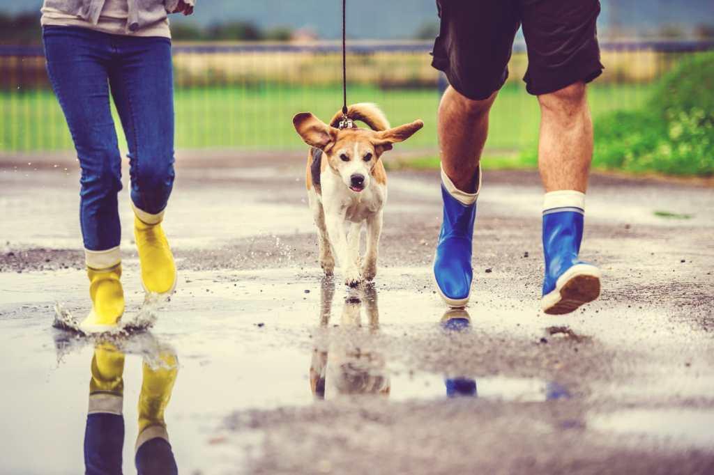 running dog in rain