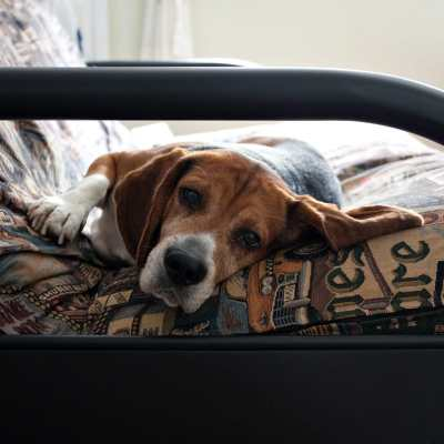 Six Tips for Making Your Older Dog Healthy and Comfortable