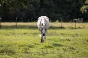 equine therapist