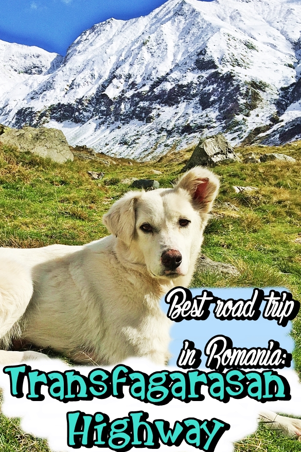 best-road-trip-in-romania-transfagarasan-highway