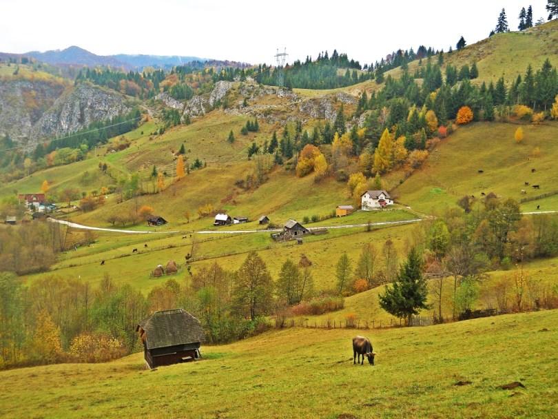 Rucar Bran Romania