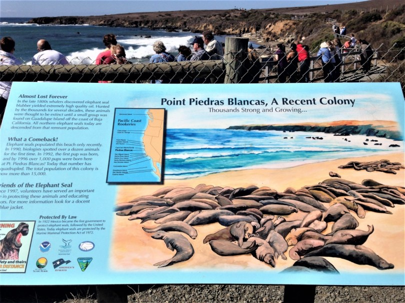 Point Piedras Blancas California