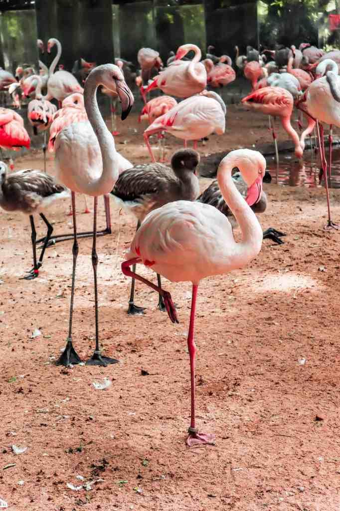 Parque das Aves Iguazu Falls
