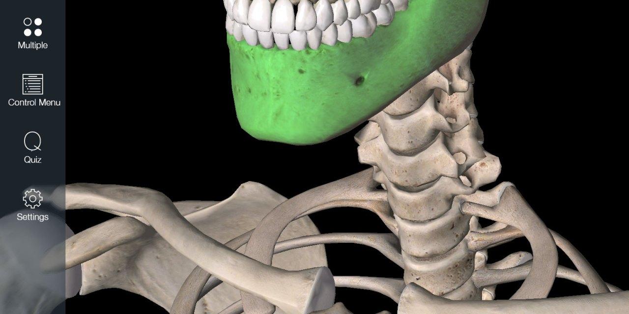 Essential Skeleton App for the iPad