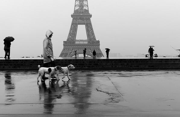 woman-dogs-Eiffel-Tower-Lauren-Scheinfeld