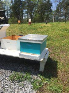 One nuc in my Carolina Blue hive