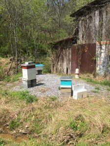 All the hives at the pond